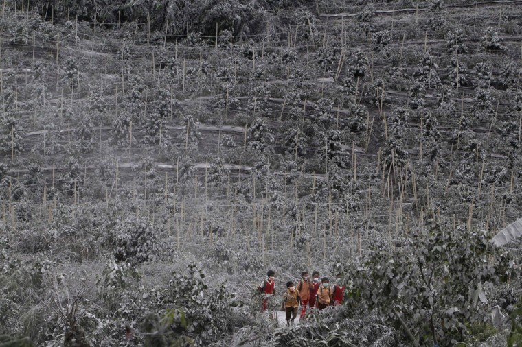 Students walks between chilli trees covered by ash from Sinabung Mount as they return home at Kuta Rakyat village in Karo district, Indonesia's north Sumatra province on November 8, 2013. (REUTERS/Roni Bintang)