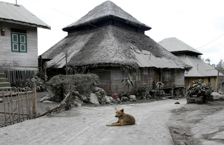 A dog sits in the middle of a road in an empty village after all villagers were evacuated a day after Mount Sinabung spewed ash at Mardingding village in Karo district, Indonesia's north Sumatra province on November 19, 2013. (REUTERS/Roni Bintang)