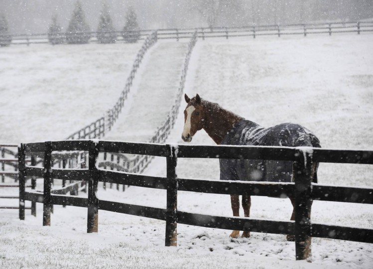 A horse stands out in the snow in a field along Rutledge Road in Fallston. (Lloyd Fox/Baltimore Sun)