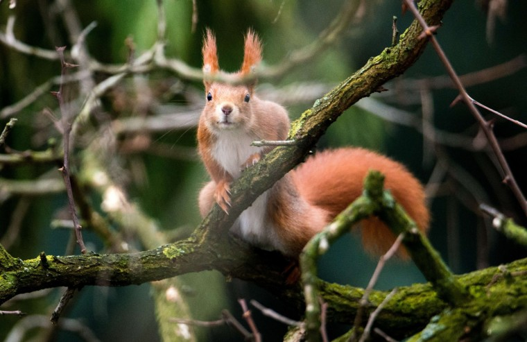 A squirrel sits on a tree in Hanover, central Germany. (Julian Stratenschulte/Getty Images)