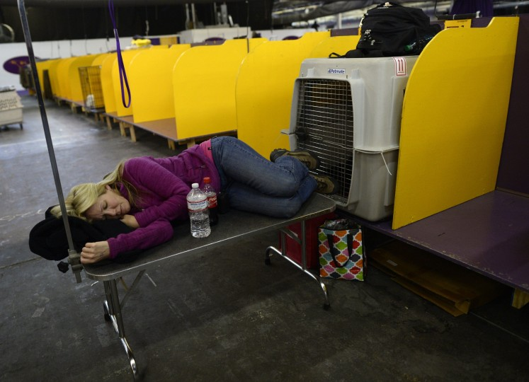 A handler takes a nap in the benching area in the benching area at Pier 92 and 94 in New York City on the second day of competition at the 138th Annual Westminster Kennel Club Dog Show February 11, 2014. The Westminster Kennel Club Dog Show is a two-day, all-breed benched show that takes place at both Pier 92 &94 and at Madison Square Garden in New York City . (Timothy Clary/AFP/Getty Images)