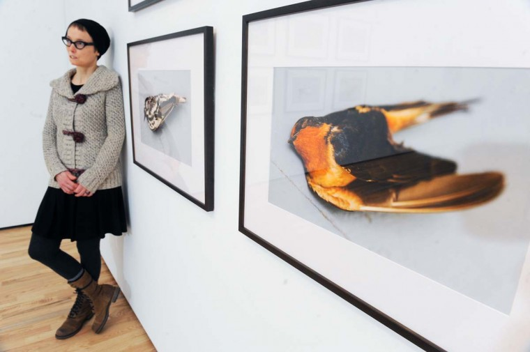 Baltimore, Md.--2/20/14-- Lynne Parks, of Baltimore, one of the 2013 winners of the Baker Artist Awards, is pictured at the Baltimore Museum of Arts, where her photographs of dead migratory birds will be exhibited on February 26. || Photo by Kenneth K. Lam/Baltimore Sun