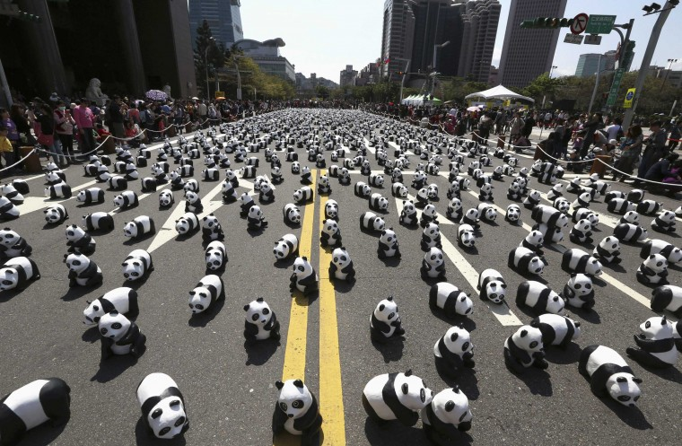 "Papier mache pandas, created by French artist Paulo Grangeon, are seen displayed outside the Taipei City Hall as part of an exhibition called ""Pandas on Tour"", February 28, 2014. According to local media, the event was launched by the World Wildlife Fund (WWF) first in Paris in 2008. Approximately 1,600 panda sculptures were displayed in the exhibition to remind people of the similar number of giant pandas still living in the wild and call on people's protection of endangered species. (REUTERS/Patrick Lin)"