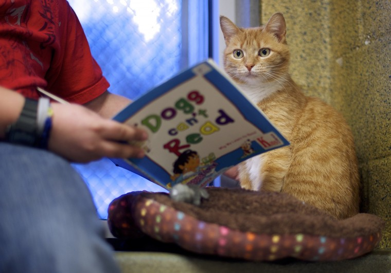 "Desmond Allen reads to ""Ginger,"" a cat up for adoption, during ""The Book Buddies Program"" at the Animal Rescue League of Berks County in Birdsboro, Pennsylvania February 11, 2014. Children in grades 1-8 read to the cats as a way to improve their reading skills and gain confidence. The shelter animals can be a non-evaluative presence that can provide support and comfort to participants without judging them. Students showed sustained focus and maintained a higher state of awareness, as well as improved attitudes toward school, according to researchers at Tufts University. Photo taken February 11, 2014. (REUTERS/Mark Makela)"