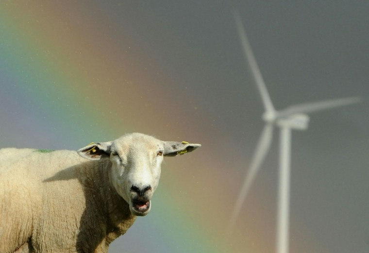 Sheep graze close to electricity-generating wind turbines as a rainbow is seen in the background on July 26, 2010 near the northern German town of Husum. (Johannes Eisele/AFP/Getty Images)