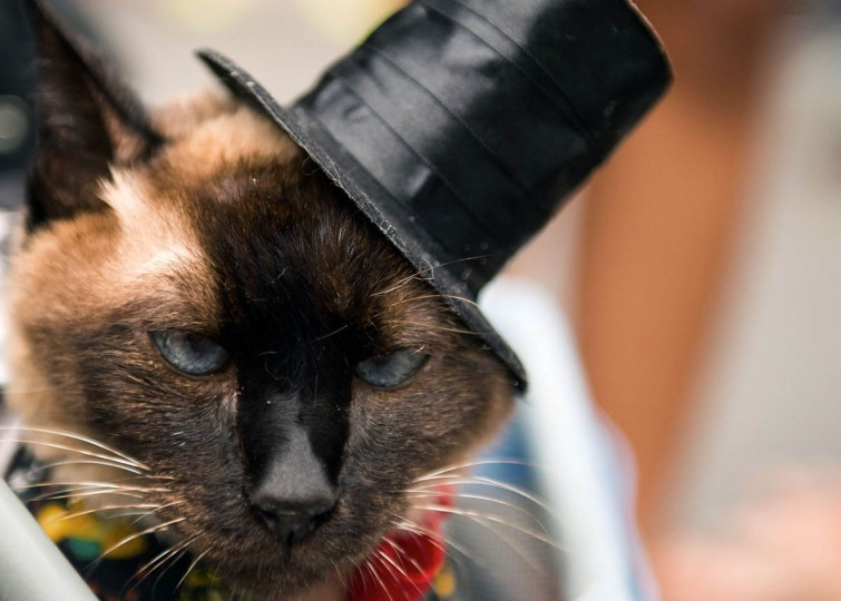 """A cat takes part in the animals' carnival parade """"Blocao"""", at Copacabana in Rio de Janeiro on February 16 , 2014. (Christophe Simon/Getty Images)"""