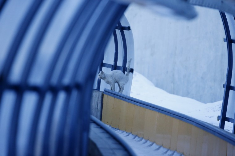 A cat on the railing during the men's luge singles training Sochi 2014 Olympic Winter Games at Sanki Sliding Center. (Kevin Jairaj/USA TODAY Sports)