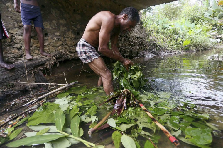 """Stick fighter Bernard Dyer uses local plants to prepare a ritual """"bush bath"""" for himself and his sticks prior to competing in the finals of the national stick fighting competition, in the village of Rio Claro. (Andrea De Silva/Reuters photo)"""