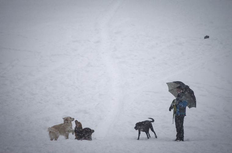 A man watches as dogs play in Central Park as it snows in New York. (REUTERS/Carlo Allegri)