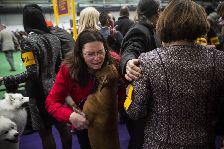 Handlers celebrate after a victory in the boxer division in the Westminster Dog Show on February 11, 2014 in New York City. The annual dog show has been showcasing the best dogs from around world for the last two days in New York. (Andrew Burton/Getty Images)