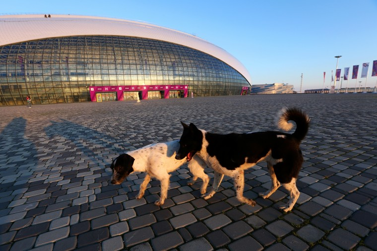 Stray dogs walk in front of the Bolshoy Ice Dome ahead of the Sochi 2014 Winter Olympics on February 2, 2014 in Sochi, Russia. (Photo by Quinn Rooney/Getty Images)