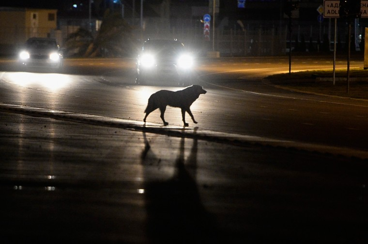 A stray dog crosses the road outside the Olympic Park prior to the Sochi 2014 Winter Olympics on February 2, 2014 in Sochi, Russia. (Photo by Pascal Le Segretain/Getty Images)