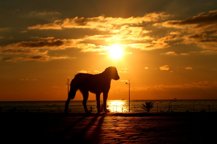 The sun sets behind a stray dog ahead of the Sochi 2014 Winter Olympics on February 2, 2014 in Sochi, Russia. (Photo by Quinn Rooney/Getty Images)