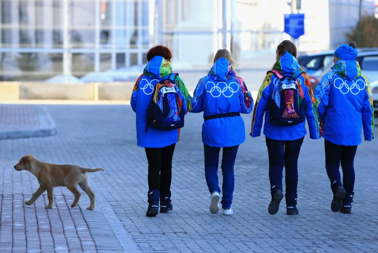 A stray dog is seen ahead of the Sochi 2014 Winter Olympics on February 2, 2014 in Rosa Khutor, Sochi. (Photo by Matthew Lewis/Getty Images)