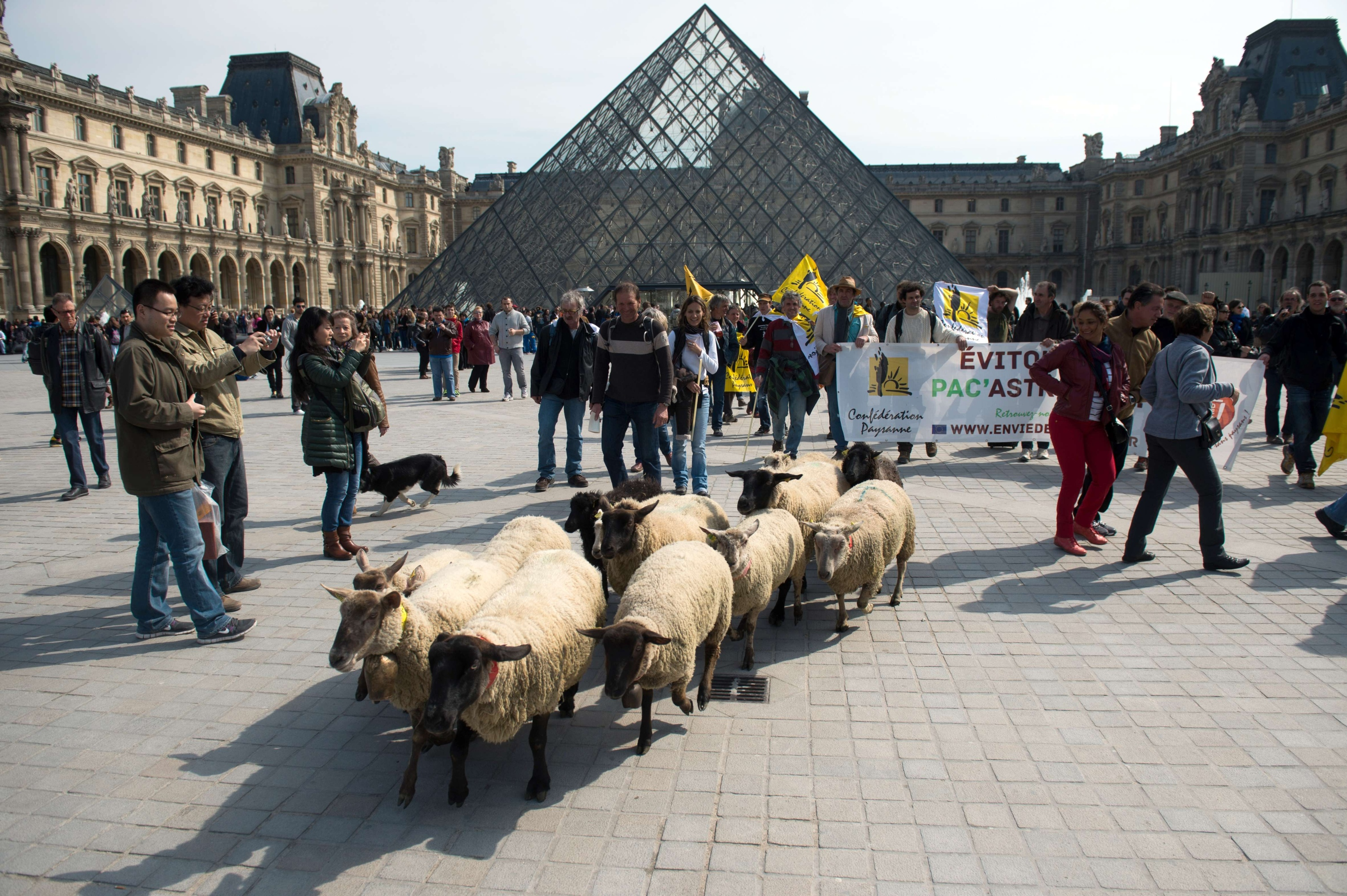 Dog booties, sheep at the Louvre, decommissioned nuclear submarines | March 28