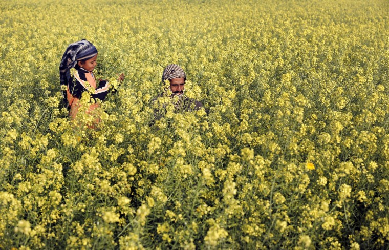 A Palestinian man and his daughter are seen amongst wild mustard flowers which grow in the fields across the Gaza Strip, on March 20, 2014, as the official start of spring is marked by the by the Vernal Equinox. (Mohammed Abed/AFP/Getty Images)