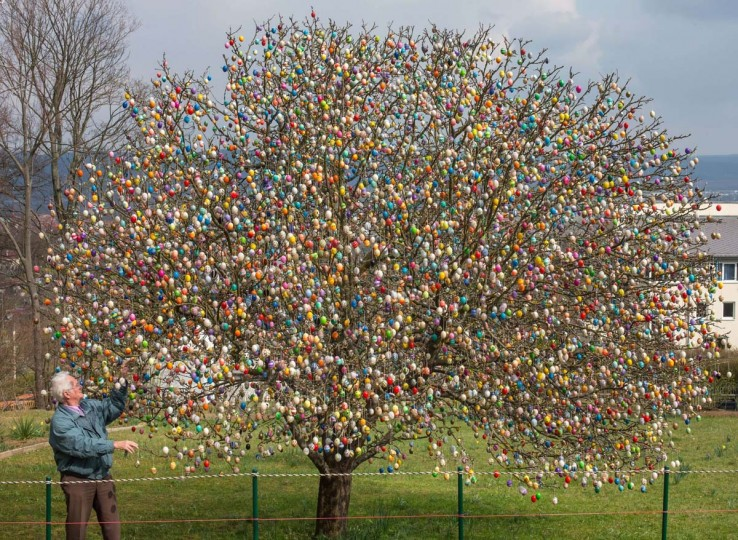 Volker Kraft decorates his apple tree with Easter eggs on March 25, 2014 in Saalfeld, eastern Germany. More than 10.000 eggs hang on the tree, attracting thousands of spectators during Easter time. (Michael Reichel/AFP/Getty Images)