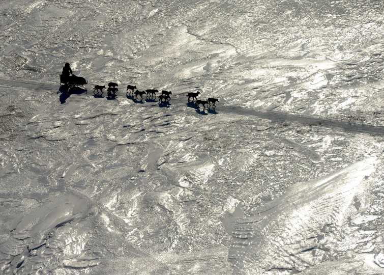 An Iditarod musher crosses the ice between the Shaktoolik and Koyuk checkpoints during the 2014 Iditarod Trail Sled Dog Race on Sunday, March 9, 2014. (Bob Hallinen/Anchorage Daily News/MCT)