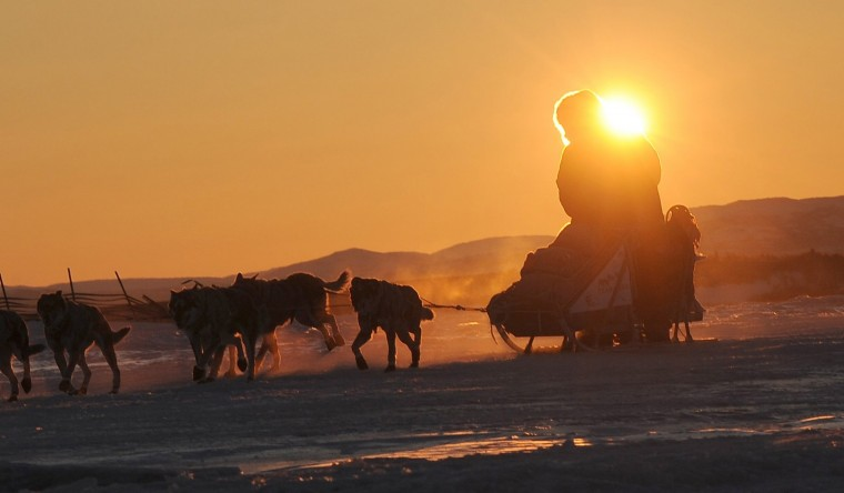 Iditarod musher Michelle Phillips, from Tagish, Canada, arrives at the Unalakleet checkpoint at sunrise during the Iditarod Trail Sled Dog Race on Sunday, March 9, 2014. (Bob Hallinen/Anchorage Daily News/MCT)