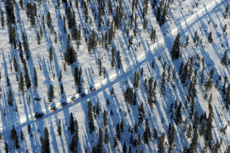 An Iditarod musher travels through the spruce forest between the checkpoints of Cripple and Ruby during the 2014 Iditarod Trail Sled Dog Race on Thursday, March 6, 2014 in Alaska. (Bob Hallinen/Anchorage Daily News/MCT)