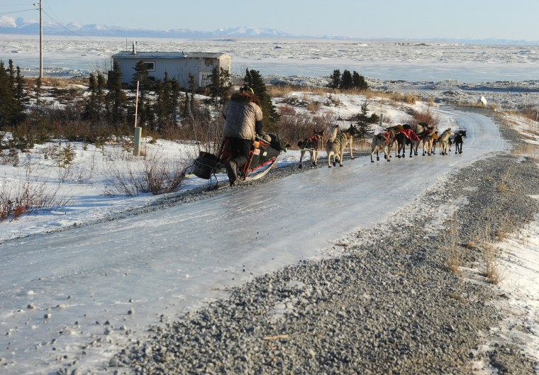 Iditarod musher Jeff King, from Denali, AK, travels down an icy road when he misses the trail turnoff as he leaves the Koyuk checkpoint during the 2014 Iditarod Trail Sled Dog Race on Sunday, March 9, 2014. (Bob Hallinen/Anchorage Daily News/MCT)