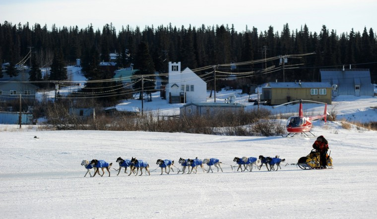 Mitch Seavey arrives at the White Mountain, Alaska, checkpoint during the Iditarod Trail Sled Dog Race on Monday, March 10, 2014. (Bob Hallinen/Anchorage Daily News/MCT)