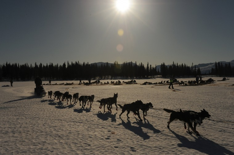 A musher leaves the Rainy Pass checkpoint during the 2014 Iditarod Trail Sled Dog Race on Monday, March 3, 2014. (Bob Hallinen/Anchorage Daily News/MCT)