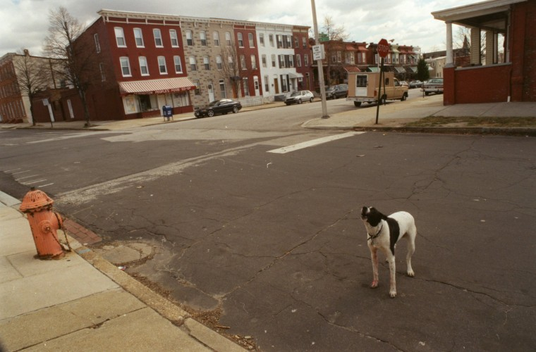 Huntingdon Avenue at 30th St. While Daisy has caring owners she still manages to slip out afternoons to go watch children from the school play during recess. Sometimes she has to wait for the kids and maybe bark at strangers. The whole neighborhood knows her and her occasional wanderings. (Mar 2, 2000/Sun file)