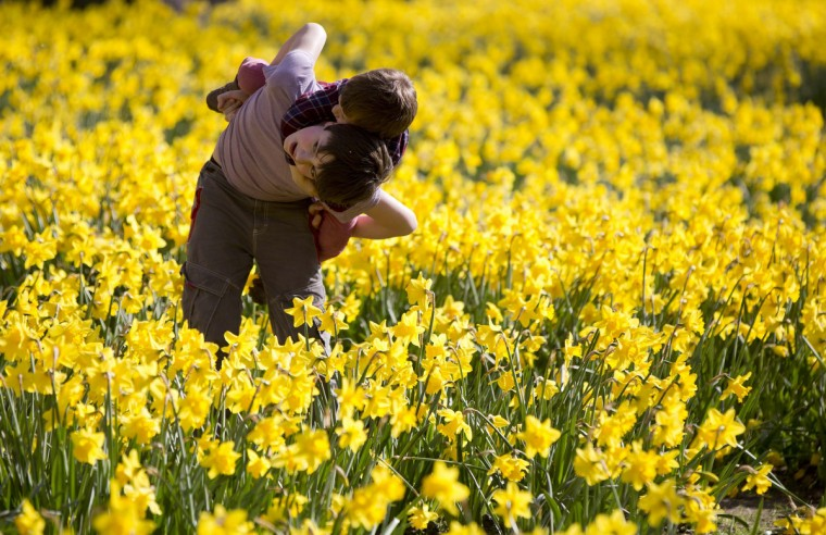 Children run through daffodils at St. James Park in London March 29, 2014. (Neil Hall / Reuters)