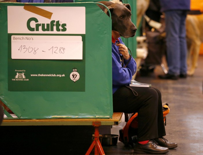 A woman sits with a Great Dane during the first day of the Crufts dog show in Birmingham, central England March 6, 2014. (REUTERS/Darren Staples)