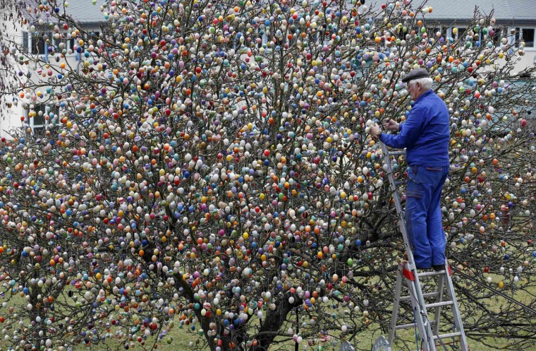 German pensioner Volker Kraft uses a step ladder as he decorates an apple tree with Easter eggs in the garden of his summerhouse, in the eastern German town of Saalfeld. Each year since 1965 Volker and his wife Christa spend up to two weeks decorating the tree with their collection of 10,000 colorful hand-painted Easter eggs in time for Easter celebrations. (Fabrizio Bensch/Reuters)