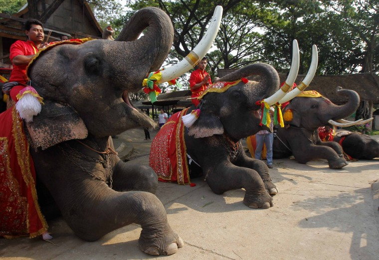 Mahouts pray while sitting on top of elephants during Thailand's National Elephant Day in the ancient Thai capital Ayutthaya March 13, 2014. Thais honoured the elephant on Thursday with special fruit and Buddhist ceremonies across the country to pay homaget o their national animal. (REUTERS/Chaiwat Subprasom)