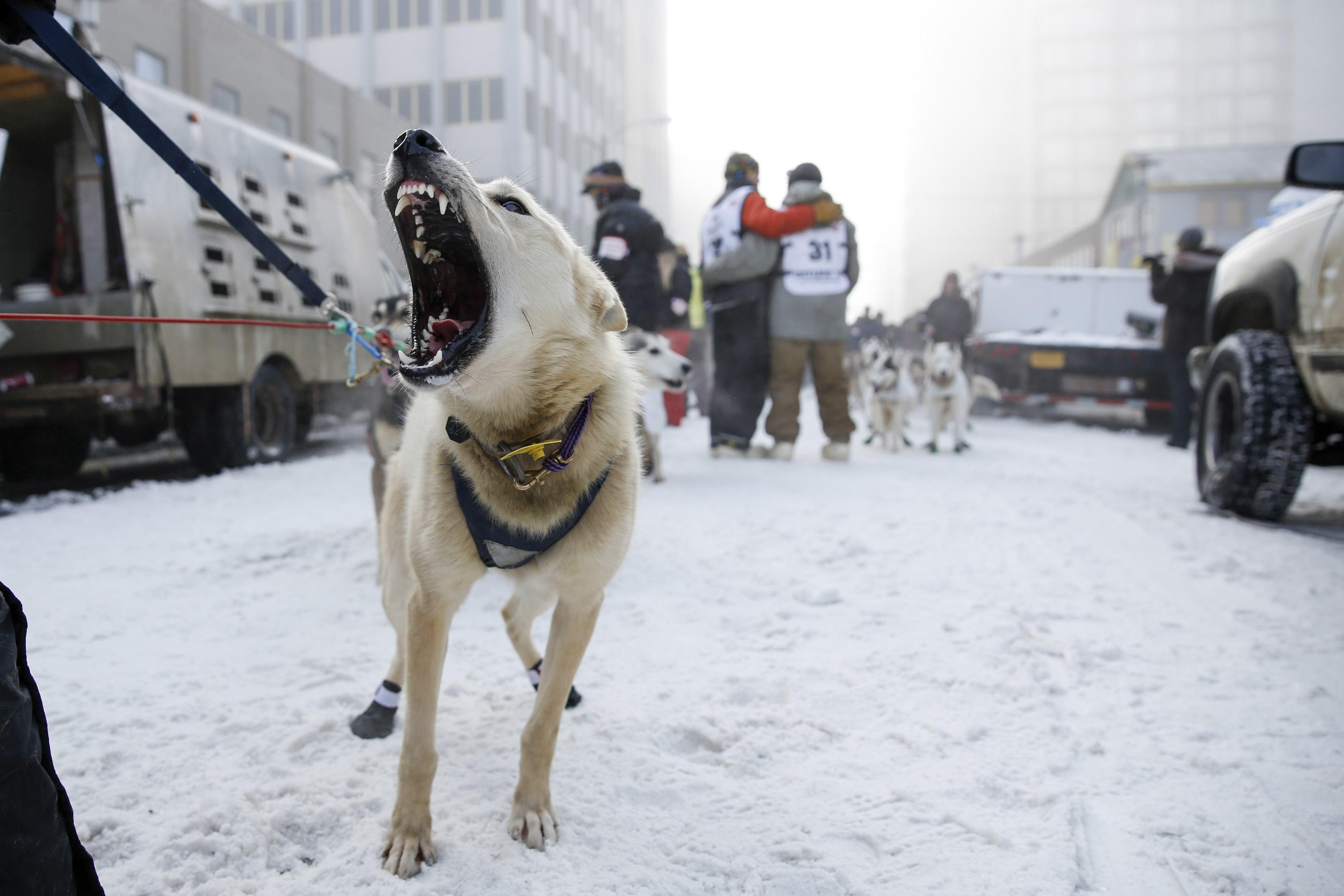 List of sled dog races