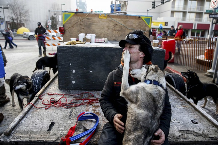 Musher Jason Mackey embraces one of his sled dogs before the ceremonial start of the Iditarod dog sled race in downtown Anchorage, Alaska, March 1, 2014. (REUTERS/Nathaniel Wilder)