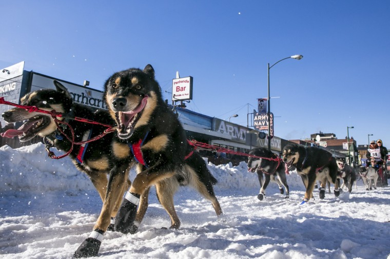 Musher Jason Mackey leaves the start chute during the ceremonial start to the Iditarod dog sled race in downtown Anchorage, Alaska, March 1, 2014. Two of Mackey's brothers as well as his dad have won the Iditarod but Jason himself has never won. (REUTERS/Nathaniel Wilder)