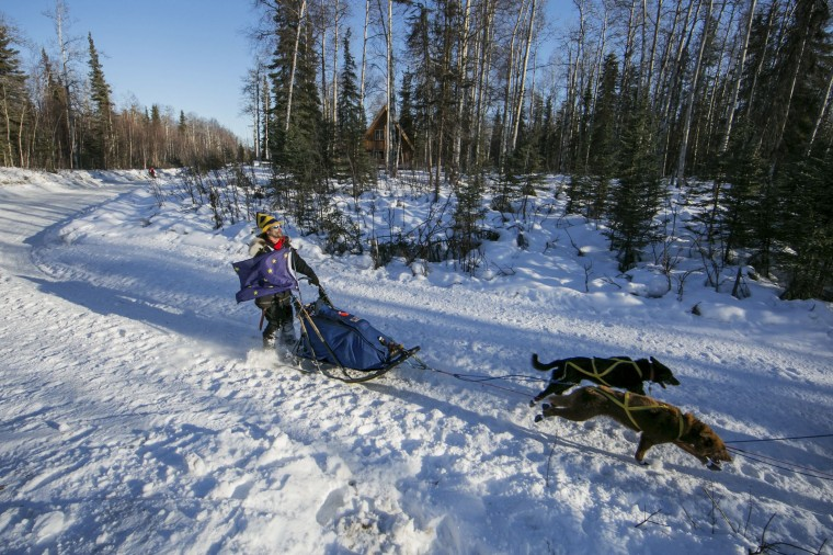 Alaskan musher Hugh Neff sports the Alaska flag as he pulls through a turn during the official restart to the Iditarod dog sled race in Willow, Alaska, March 2, 2014. The nearly 1,000-mile (1,600-km) Iditarod Trail Sled Dog Race commemorates a 1925 rescue mission that carried diphtheria serum by sled-dog relay to the coastal community of Nome, which remains the final destination in this 42nd edition of the event. (REUTERS/Nathaniel Wilder)
