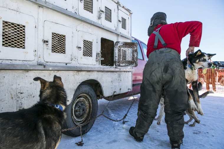 A musher carries a dogs in preparation for the official restart of the Iditarod dog sled race in Willow, Alaska, March 2, 2014. The nearly 1,000-mile (1,600-km) Iditarod Trail Sled Dog Race commemorates a 1925 rescue mission that carried diphtheria serum by sled-dog relay to the coastal community of Nome, which remains the final destination in this 42nd edition of the event. (REUTERS/Nathaniel Wilder)