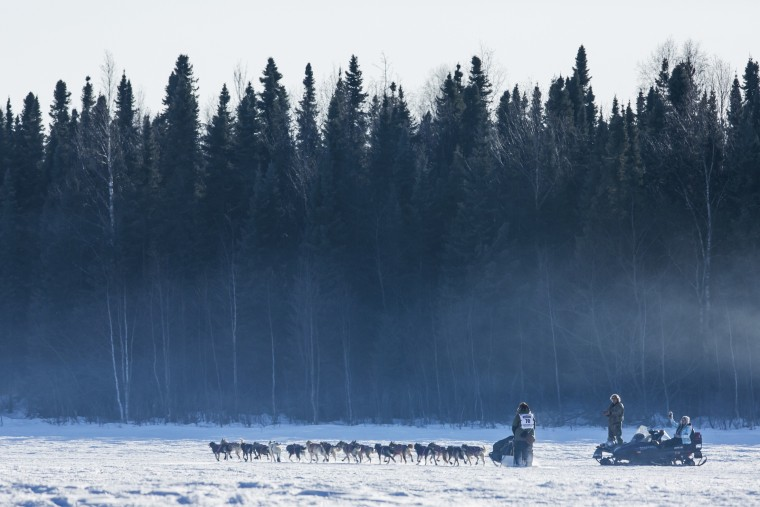 The final starter in the race, Sonny Lindner's team heads into the woods after all the other teams during the official restart of the Iditarod dog sled race in Willow, Alaska, March 2, 2014. The nearly 1,000-mile (1,600-km) Iditarod Trail Sled Dog Race commemorates a 1925 rescue mission that carried diphtheria serum by sled-dog relay to the coastal community of Nome, which remains the final destination in this 42nd edition of the event. (REUTERS/Nathaniel Wilder)
