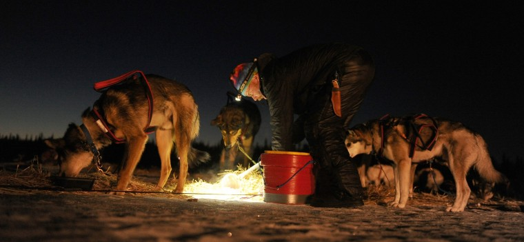 Mitch Seavey feeds his team at the Finger Lake checkpoint during the 2014 Iditarod Trail Sled Dog Race on Monday morning, March 3, 2014, in Alaska. (Bob Hallinen/Anchorage Daily News/MCT)