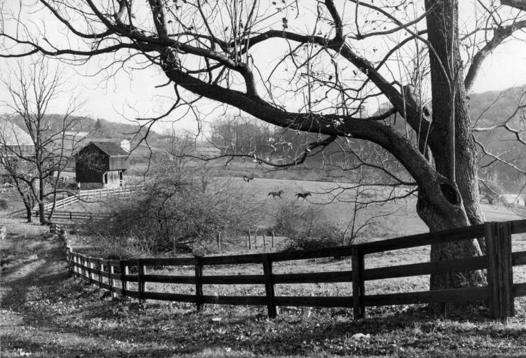 November 1976 was a sunny but brisk day, which helped turn these horses frisky as they romped across the pasture of a farm off York road south of Hereford in Baltimore County. (Lloyd Pearson/Baltimore Sun)