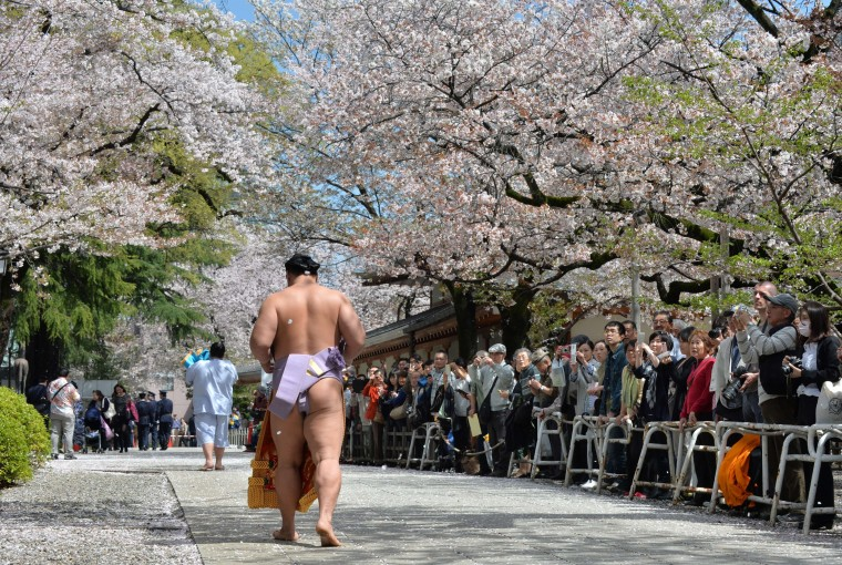 "TOPSHOTS A sumo wrestler walks under cherry trees in full bloom at a ceremonial sumo exhibition at Yasukuni shrine in Tokyo on April 4. Sumo wrestlers took part in a ""honozumo"", a ceremonial one-day exhibition for hundreds of spectators held within the shrine's precincts. 