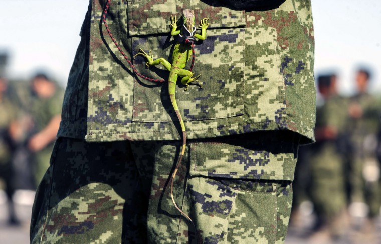 An iguana hangs from the uniform of a Mexican soldier during the burning of marijuana, heroin, cocaine and methamphetamine at a military base in Monterrey, Nuevo Leon state. The Mexican Army burnt more than 17.5 tons of drug seized to groups of drug traffickers from the north of the country, reported a military authority. (Julio Cesar Aguilar/Getty Images)