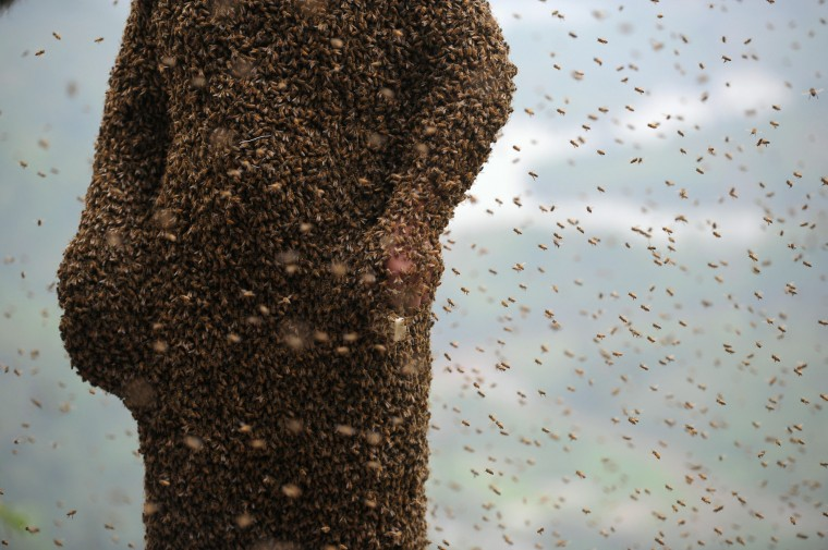 This picture taken on April 9, 2014 shows She Ping, a 34 year-old local beekeeper, covered with a swarm of bees on a small hill in southwest China's Chongqing. She Ping released more than 460,000 bees, attracted them to his body, and made himself a suit of bees that weighs 45.65kg within 40 minutes, local newspaper reported. (China Out/AFP/Getty Images)