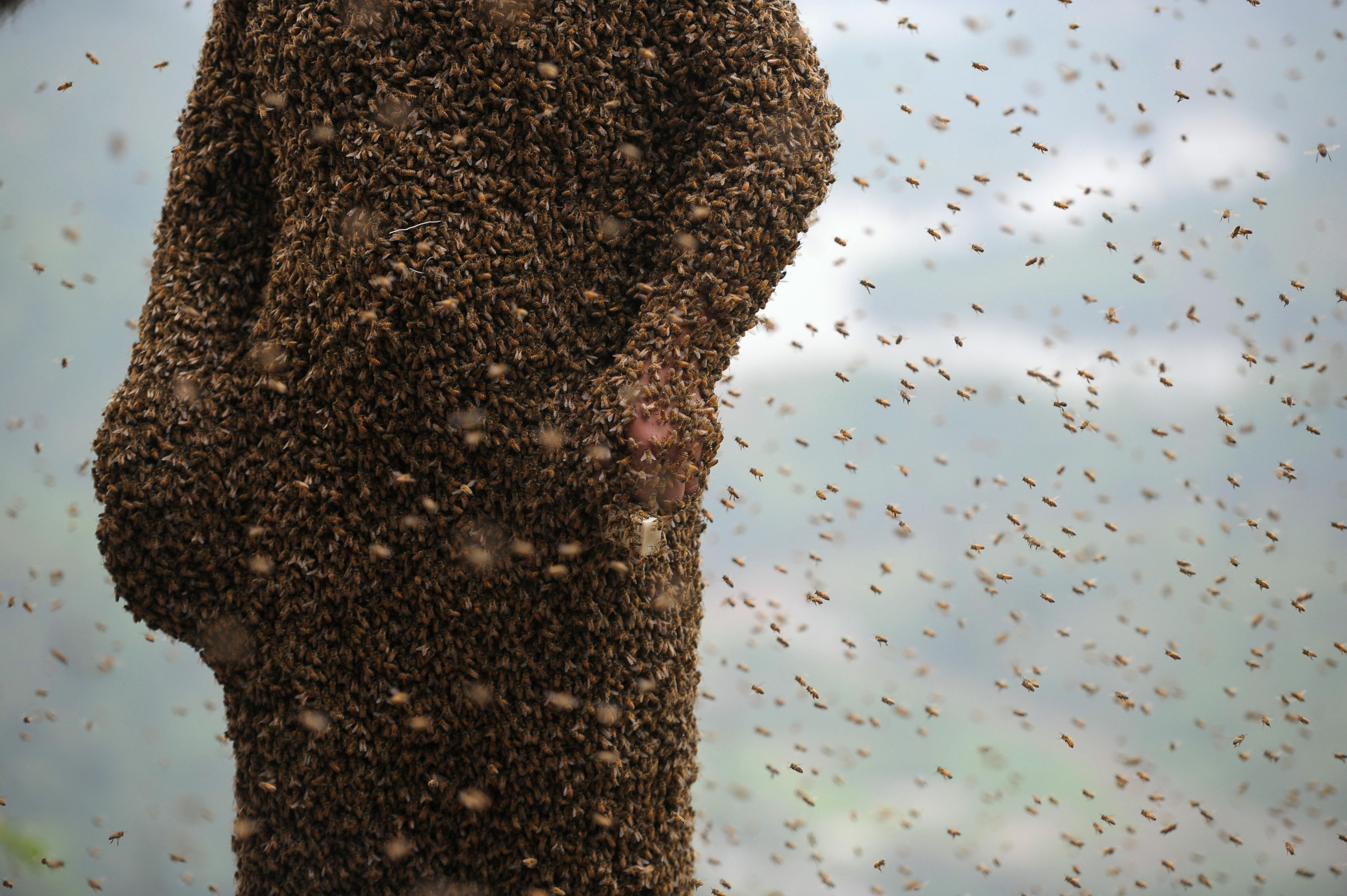 Beekeeper creates coat of living bees