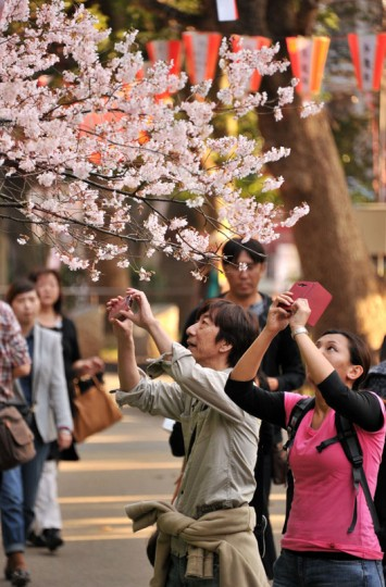 People take pictures of cherry blossoms at a park in Tokyo on March 25, 2014. Spring officially arrived in Tokyo on March 25 when Japan's weather agency announced the start of the cherry blossom season. (Photo by Yoshikazu Tsuno/AFP/Getty Images)