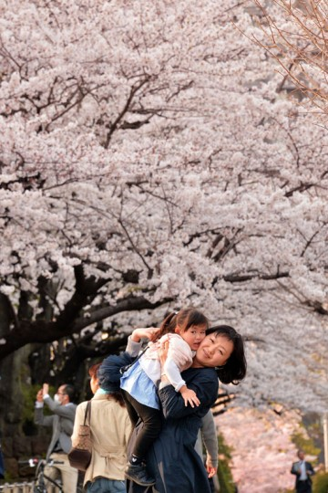 A woman holds her daughter in her arms as she walks under cherry blossom trees in full bloom in Tokyo on April 1, 2014. Viewing cherry blossoms is a national pastime and cultural event in Japan, where millions of people turn out to admire them annually. (Photo by Yoshikazu Tsuno/AFP/Getty Images)