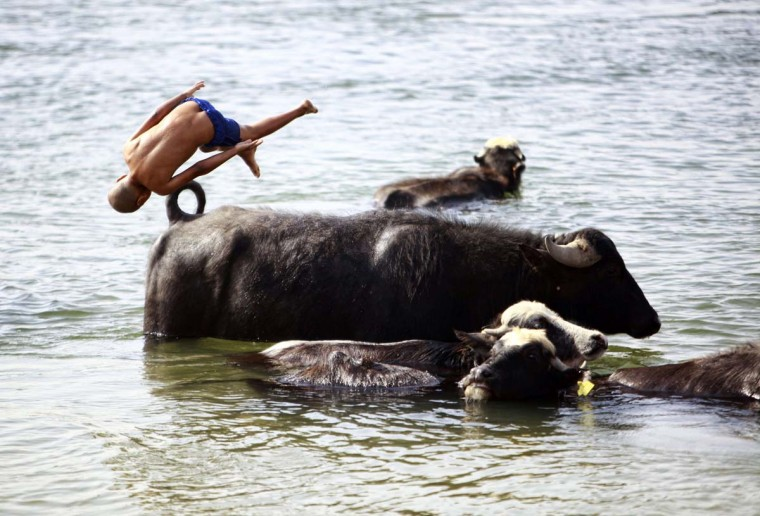 An Iraqi boy jumps in the water near cows south of Iraq's central Shiite Muslim Shrine city of Najaf on April 14, 2014. (Haidar Hamdani/AFP/Getty Images)