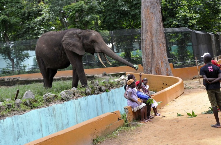 An elephant approaches children sitting on the edge of its enclosure at the zoo in Abidjan, Ivory Coast, on April 24, 2014. (Sia Kambou/AFP/Getty Images)