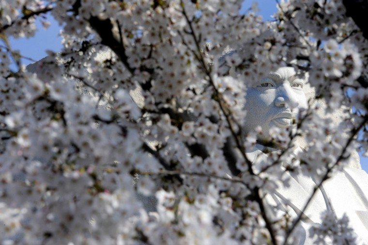 The Martin Luther King, Jr. Memorial is framed by cherry blossoms. (Kim Hairston/Baltimore Sun)