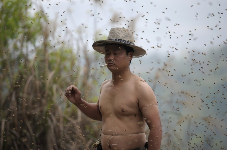 She Ping, a 34-year-old beekeeper, attempts to cover his body with bees in Chongqing municipality, April 9, 2014. He used queen bees to successfully attract more than 460,000 bees, weighing over 45 kg (99 lbs), within 40 minutes, local media reported. Picture taken April 9, 2014. (China Daily/REUTERS)